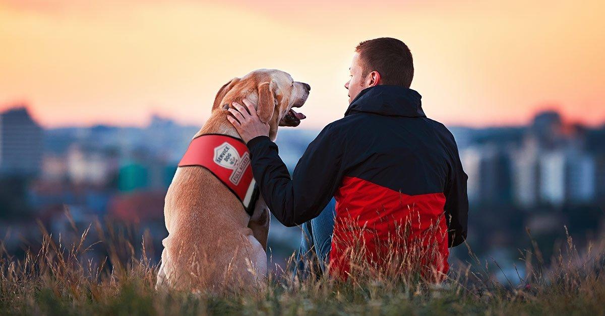 myassistancedog